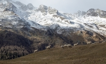 Winter is coming in the Italian alps Pale colours and first snow