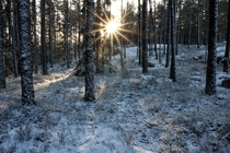 Winter is coming to Sweden and the sun never rises high above the horizon