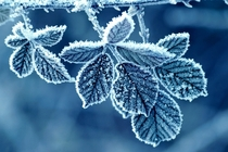 Winter Macro Photo