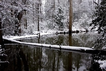 Winter pond shot in South Carolina   x