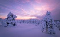 Winter sunset in Pallas-Yllstunturi National Park Muonio Finland