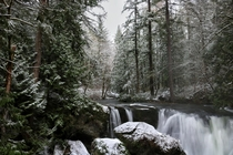 Winter Wonderland in Whatcom Falls WA