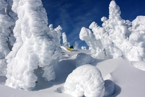 Winter Wonderland on Mount Washington in Vancouver Island Canada -