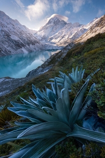 Winters afternoon Aoraki New Zealand OC x williampatino_photography