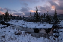 Wintry bog in the West Virginia Highlands