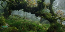 Wistmans Wood Dartmoor National Park Devon England  Photographed by Andy Farrer
