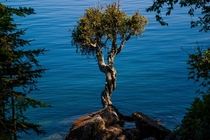 Witchtree on the Grand Portage Minnesota Reservation Land leading into Lake Superior