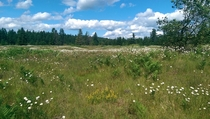 Wolf Haven Prairie Restoration - Tenino WA