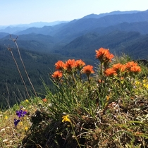 Wolf Rock Oregon with some lovely indian paintbrush on the summit