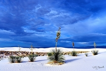 Wonderful White Sands New Mexico