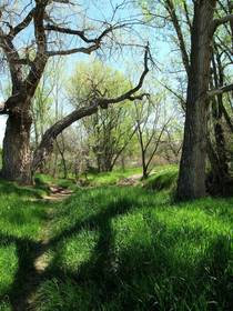 Wooded hollow my happy place - Littleton Colorado