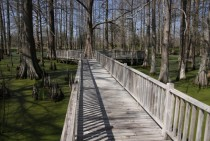 Wooden walkway over a swamp