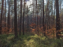 Woods close to my home Poland