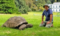 Worlds oldest living animal Jonathan the Tortoise gets a new lease of life after vet puts him on a healthy diet at the age of