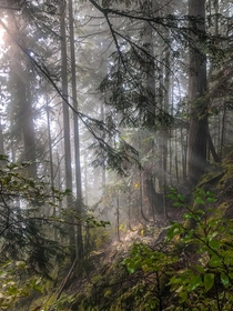 Worth the am wakeup to see the rising sun interact with the fog and forest Skykomish WA  IG hikedailyprn