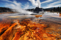 Yellowstone National Park Wyoming USA x