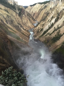 YellowStone National Park  x
