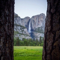 Yosemite Falls framed by two pines but the falls stand by claims of innocence natureprofessor