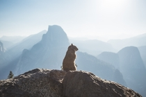 Yosemite squirrel and Half Dome