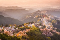 Yoshino Japan during the cherry blossom
