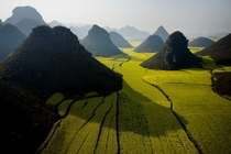 Yunnan Field China