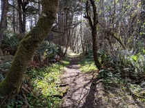 Yurok Loop Trail in Del Norte Coast Redwoods State Park CA