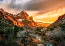 Zions light Sunset at The watchman Zion National Park OC  IG johnperhach_photo_